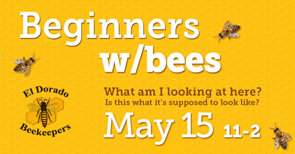 beginners with bees shared link 1200x627