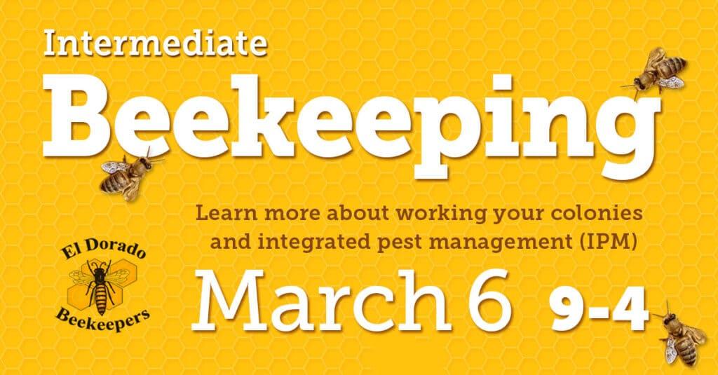 intermediate beekeeping shared link 1200x627